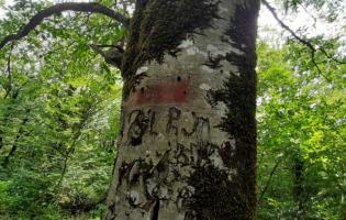 Русские военные отметили в лесу т.н. границу красной краской